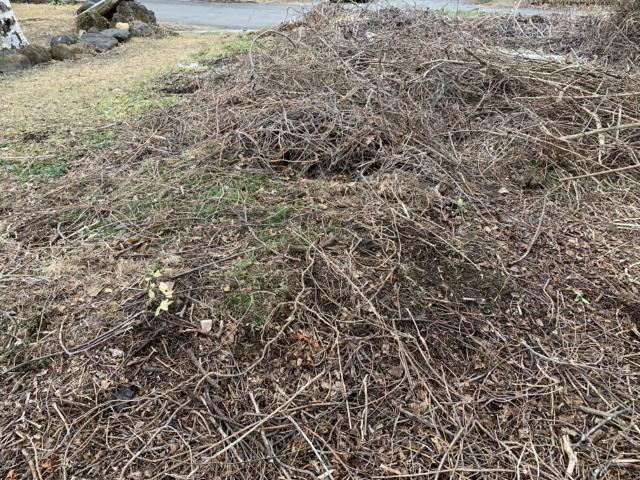 庭の雑木とイバラを処理したあと