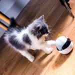 猫用スマートロボ イーボ