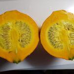生食かぼちゃ コリンキー